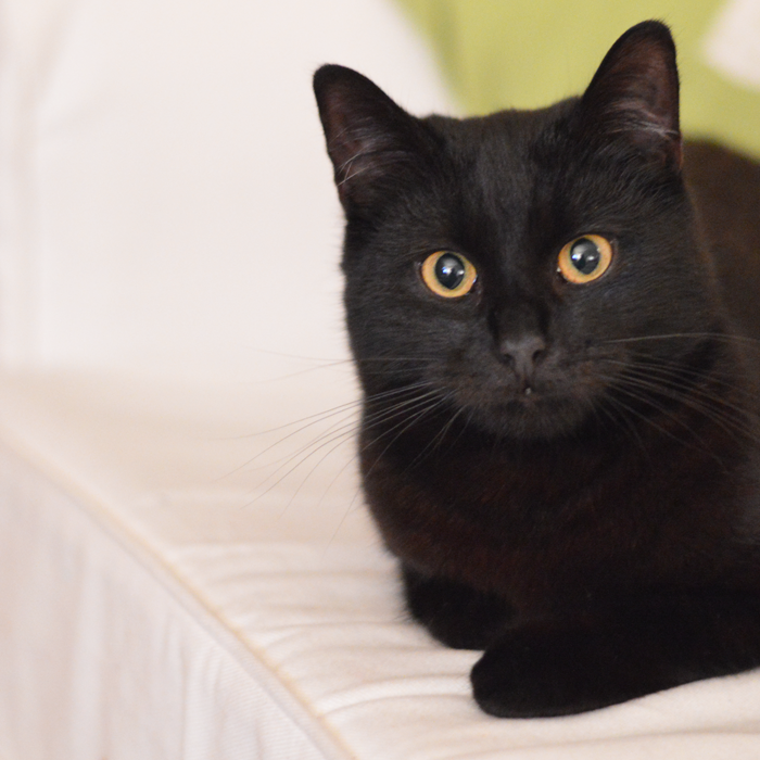 TWELVE WAYS YOUR LIFE CHANGES WHEN YOU GET A CAT