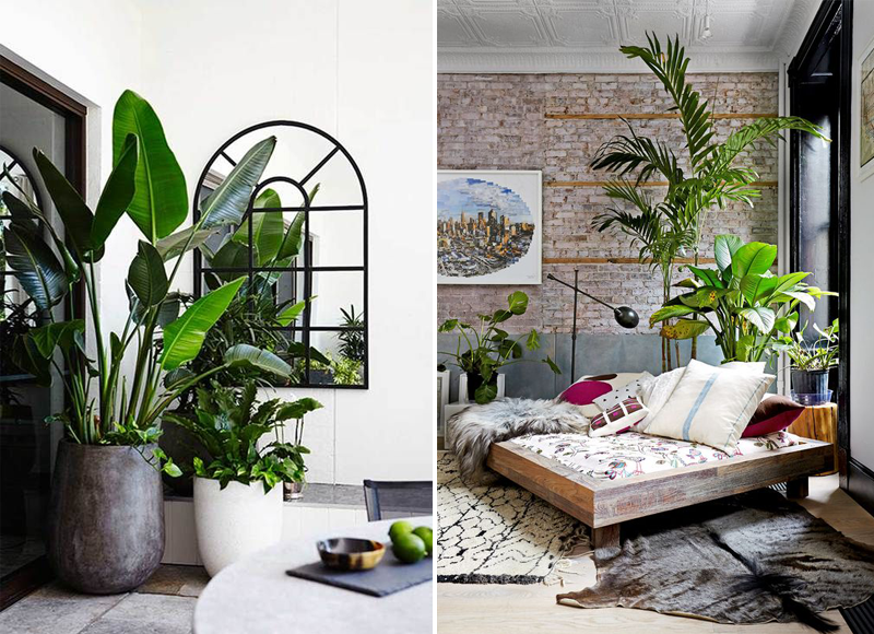 Twelve stylish indoor plant ideas for city living apartment number 4 for Living room with indoor plants